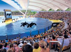 Loro Parque, Tenerife, Canary Island - amazing but didn't realise how cruel this is
