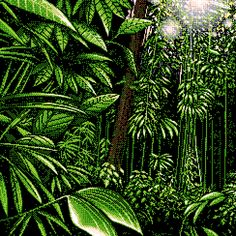 noirlac #jungle #pixelart