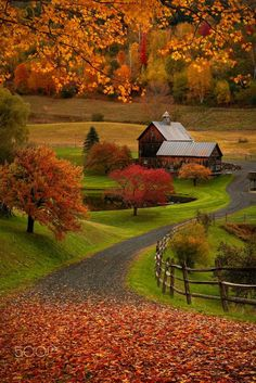 Autumn colour in green pastures. Beautiful!