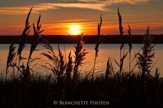 Sunrise through the Reeds at Fort Hill in Eastham.  Photo by Mike Blanchette,