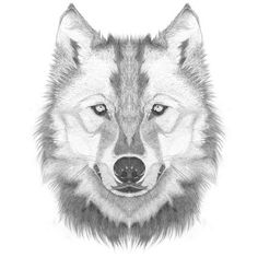 How to Draw a Wolf Head / Step By Step Lesson - Click Pic For Video!