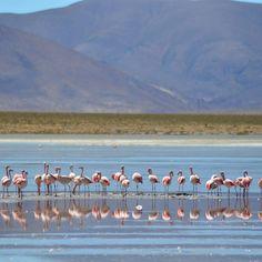 Los flamencos rosas en el precioso lago Rojo dentro del tour de San Pedro de Atacama al Salar de Uyuni. #denomades