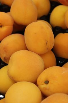 Apricots now available at your local Adams