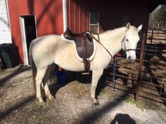 This Kimberly Stock Saddle worked out perfectly for this gray horse and her owner. Sits nice and level and balanced.