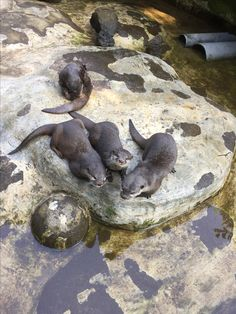 Hello from the Otter side 😄