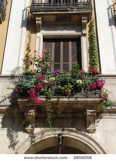 potted vines for bedroom balconyhttp://pinterest.com/pin/171207223306819778/repin/