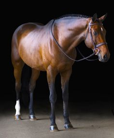 Emily, 21, Charleston/Hamptons. Sorority Girl and Equestrian.