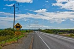 Stuart Highway, outback South Australia