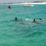 Dolphin Tour Gallery 2