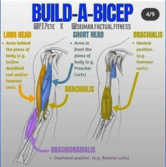 Biceps Workout, Gym Workouts, Workout Tips, Workout Routines, Get Bigger Arms, Reverse Curls, Concentration Curls, Forearm Muscles, Preacher Curls