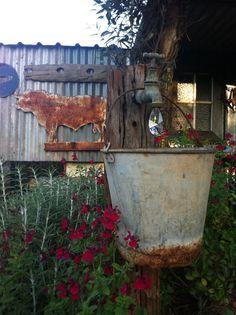 Golden glow#bird house#cottage garden. Toowoomba. Australia | My ...