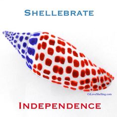 iloveshelling#july4th #independence #fourthofjuly #independenceday #4thofjuly #junonia #seashell #shell #sanibel #sanibelisland #shelling #iloveshelling