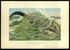 Tylosaurus - Early Prehistoric Animal and Dinosaur Pictures