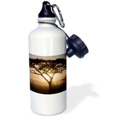 3dRose Tanzania, Ngorongoro Conservation, Acacia Tree-AF45 RBE0320 - Ralph H. Bendjebar, Sports Water Bottle, 21oz