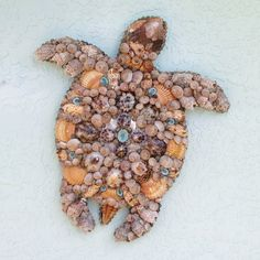 Shell art Ive developed a phobia of small moving wildlife thanx to all you inbasols