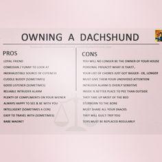 ilovedachshunds's photo on Instagram