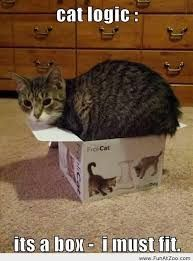 cats in boxes - Google Search