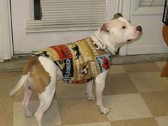 "Capone's ""dog lounge"" fleece dog coat from Maggietheboxer.com"