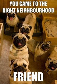pugs, pugs, pugs! ~ re-pinned by pugaddict.com pug gifts, apparel, and home decor.