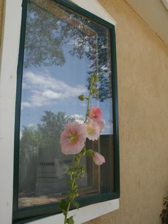 Hollyhocks and Taos sky reflection on our bedroom window.  Taos, New Mexico