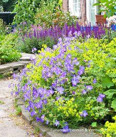 Balcony, Patio, and Courtyard Gardening Cottage Garden Design, Cottage Garden Plants, Geranium Vivace, Garden Workshops, Fence Landscaping, Garden Pictures, Garden Borders, Plantation, Flowers
