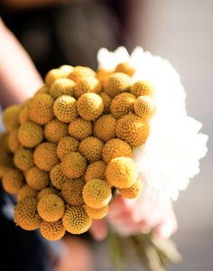 I love these flowers - billy ball flowers!