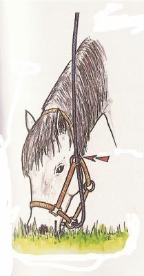 Blog de Klaramina - Page 12 - Trucs & Astuces pour l'équitation - Skyrock.com