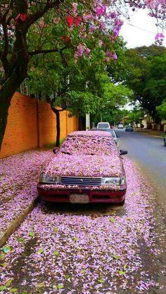 Calles de Asuncion,agosto del 2015