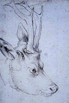Die 57 Besten Bilder Von Rehbock Roe Deer Hunting Und Big Game