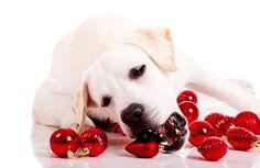 O Christmas Tree, Don't Hurt My Pet