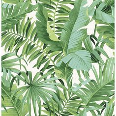 We are loving this Baja Green Jungle Tropical Leaf Wallpaper. Create your own tropical oasis with stunning wallpaper!   Full of texture and vibrant colours would make a perfect feature wall in any room. Palm Leaf Wallpaper, Tropical Wallpaper, Botanical Wallpaper, Green Wallpaper, Print Wallpaper, Wallpaper Roll, Peel And Stick Wallpaper, Bedroom Wallpaper, Botanical Prints