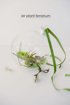 DIY Air Plant Ornament by asublerevelry: So fresh for the New Year!   DIY