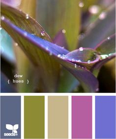 Dew Hues {Design seeds} I love these colors! It would make good inspiration for colors for a room, and I have that plant already! :)