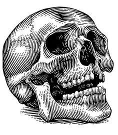 Skull print. Crane effet gravure eau forte, sérigraphie. by Howell Golson
