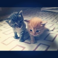 don't even like cats but this makes me melt <3