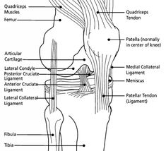 quadriceps exercises for knee pain - Google Search