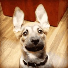 "Share this ""Curious dog"" animated gif image with everyone. Gif4Share is best source of Funny GIFs, Cats GIFs, Dog GIFs to Share on social networks and chat."