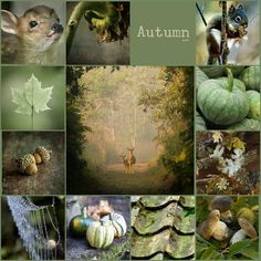 Autumn greens mood collage