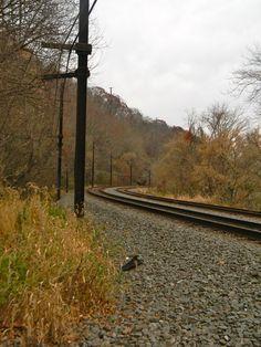 Railroad at Safe Harbor, PA