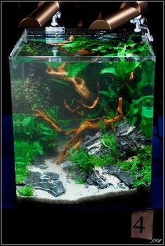 Layout by Swee. #aquascaping