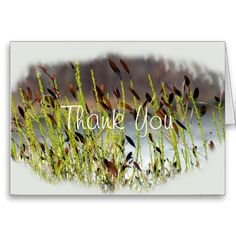 Amber Thank You Cards