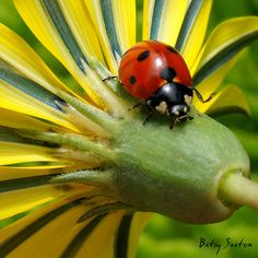 Great photos of ladybugs