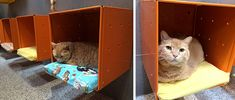 The Humane Society of Boulder Valley in Boulder, Colorado recently remodeled their cat adoption center to create a Catification wonderland! Their goal was to create an attractive space that's comfortable and functional for both cats and visitors. The cage-free cat rooms are bright and colorful, bringing in the Colorado sunshine through solar tubes in the…