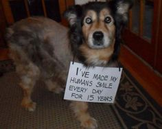 love old dogs <3