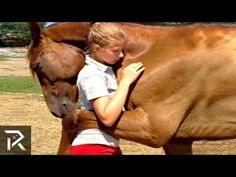 Unbelievable Animals That Saved People'S Lives : Video Clips From The Coolest One