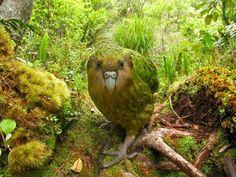 Birds4All - Google+