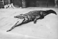 Crocodile Eating Ballerina, from the Pina Bausch Ballet 'Keushleitslegende', Wuppertal, 1983 (photo by Helmut Newton)  Helmut Newton, Pina Bausch, Crocodile Eating, Crocodile Animal, Crocodile Tears, Frank Horvat, Newton Photo, Foto Portrait, Concours Photo