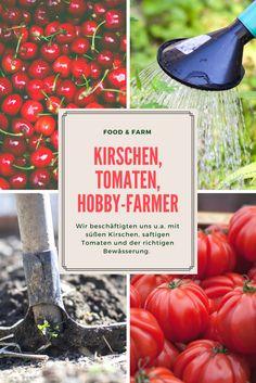 Das neue Magazin für Besser-Esser und Freizeit-Farmer! FOOD & FARM liefert Ihnen 6x im Jahr kulinarischen Genuss, tolle Reportagen und jede Menge Anregungen zum Eigenanbau!
