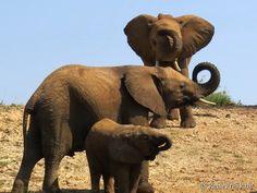Über Instagram hier eingefügt #Gratis #kostenlos: http://ift.tt/2bZZ77d #Safari #Ebook #Südafrika. Plus: #Malariafrei #Wildreservat #wb1001rb #wbesaesa @jacislodges @pilanesberg_  @rhulani_lodge #wbpinsa #travelblogger #germanbloggers #safarilodge #feelthebush #luxurysafari @mongenalodge #urlaub @samara_karoo