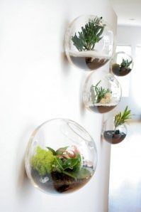 neat interior garden idea